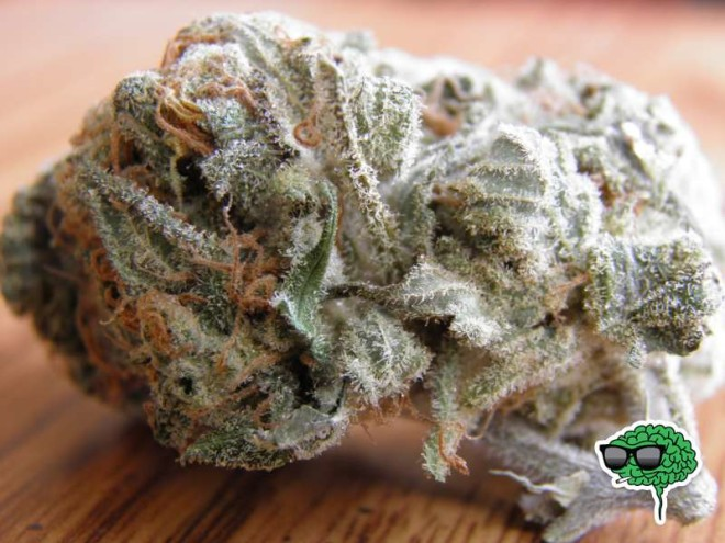 white-widow-329l